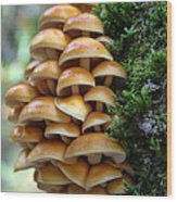 Mushrooms 2 Wood Print