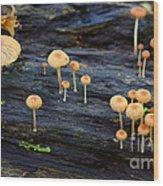 Mushrooms Amazon Jungle Brazil 4 Wood Print