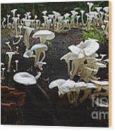 Mushrooms Amazon Jungle Brazil 5 Wood Print