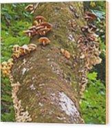 Mushroom's Kingdom Wood Print