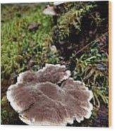 Mushrooms On A Stump Wood Print by Steven Valkenberg