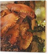 Mushrooms Untitled 2754 Wood Print