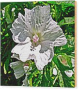 Musk Mallow Along Trail To Cap Gaspe In Forillon National Park-quebec  Wood Print