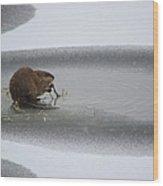 Muskrat Meal On Ice Wood Print