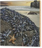 Mussel Beach Wood Print