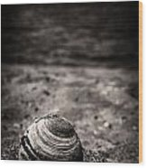 Mussel On The Beach Wood Print