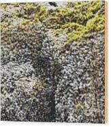 Mussels Barnacles Seaweed Closeup Wood Print