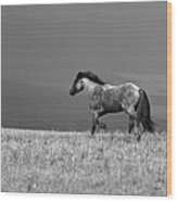 Mustang 2 Bw Wood Print by Roger Snyder