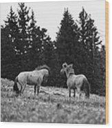 Mustang Challenge 6 Bw Wood Print
