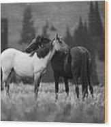 Mustangs Grooming 1 Bw Wood Print