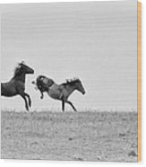 Mustangs Sparring 1 Wood Print by Roger Snyder