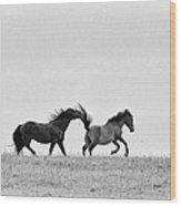 Mustangs Sparring 2 Wood Print by Roger Snyder