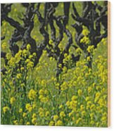 Mustard And Old Vines Wood Print