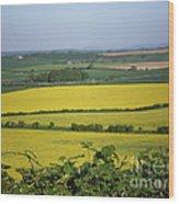 Mustard Colour Fields Wood Print