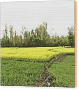 Mustard Fields In Kashmir On The Way To The Town Of Sonamarg Wood Print