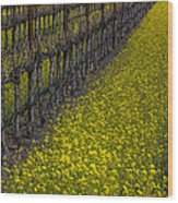 Mustrad Grass In The Vineyards Wood Print by Garry Gay