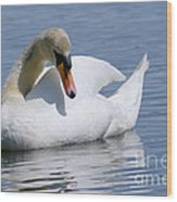 Mute Swan 1 Wood Print by Sharon Talson
