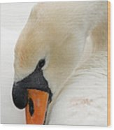 Mute Swan Fine Art Photograph Wood Print