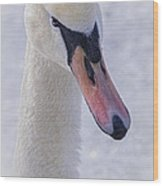 Mute Swan On Ice Wood Print