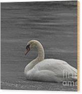 Mute Swan On Ice Wood Print