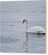 Mute Swan Pictures 131 Wood Print