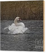 Mute Swan Pictures 97 Wood Print