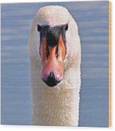 Mute Swan Staring Wood Print