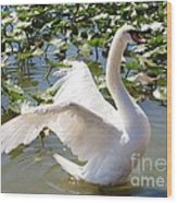 Mute Swan Wings Wood Print