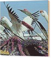 Mute Swans Rose Parade Float By Kodak Wood Print