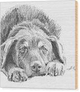 Mutt Pencil Portrait Wood Print