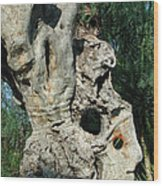 My Best Olive Tree Friend  Home Privat Spain Since 1999 Wood Print