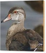 My Feather Friend - Wood Duck Wood Print
