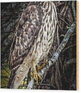 My Hawk Encounter Wood Print