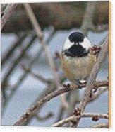 My Lil Chickadee Wood Print by Rhonda Humphreys