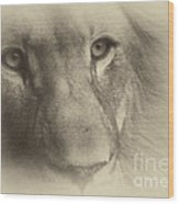My Lion Eyes In Antique Wood Print