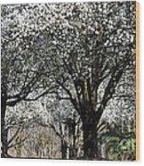 My Neighborhood In Spring Wood Print