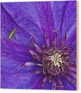 My Old Clematis Home Wood Print by Kristi Swift