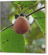 My Persimmon Tree Wood Print
