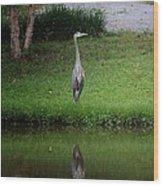 My Reflection - Heron Wood Print