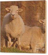 My Sheep ...   Wood Print