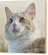 My Squishy Wood Print