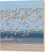 My Tern Wood Print