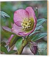 My Wild Xmas Rose Wood Print