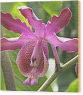 Myrmecophila Orchid Wood Print