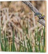 Myrtle Warbler Colors Wood Print
