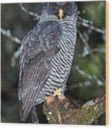 Mysterious Owl Wood Print