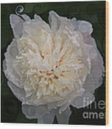 Mysterious White Peony Abstract Painting Wood Print