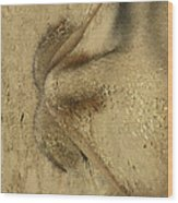 Mystery Object Aka Baby Elephant Wood Print