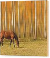 Mystic Autumn Grazing Horse Wood Print
