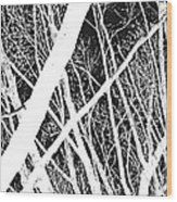 Mystic Forest Wood Print by Steven Milner